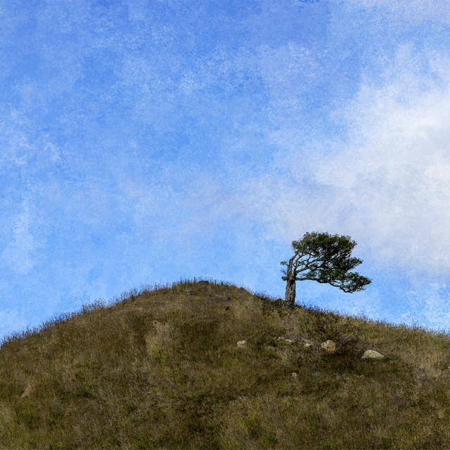 """Lone tree"" stock image"
