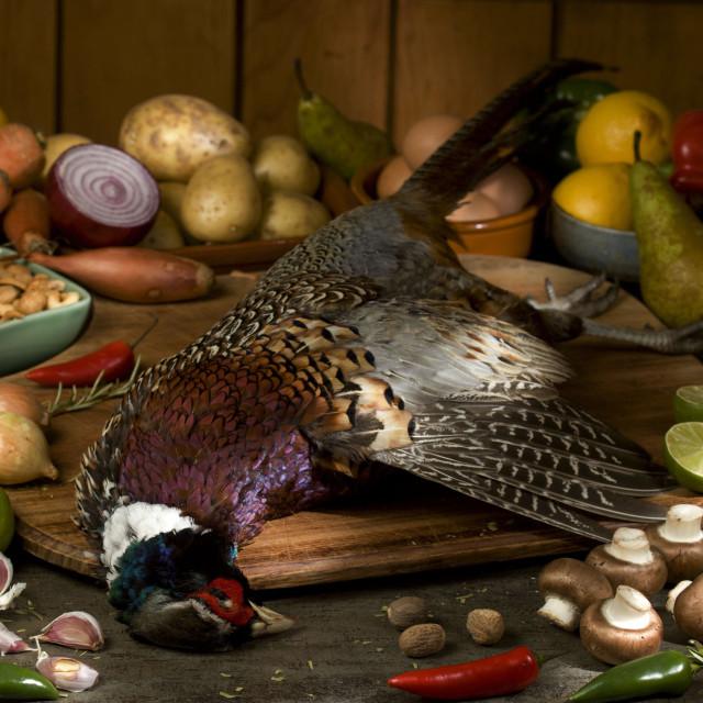 """pheasant"" stock image"