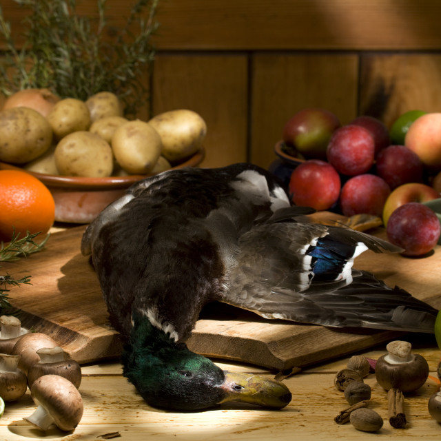 """""""duck with ingredients"""" stock image"""