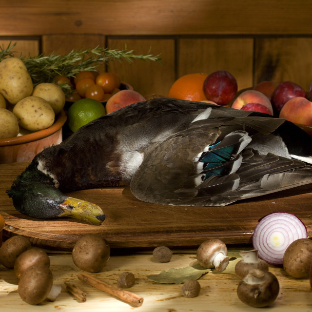 """duck still life"" stock image"