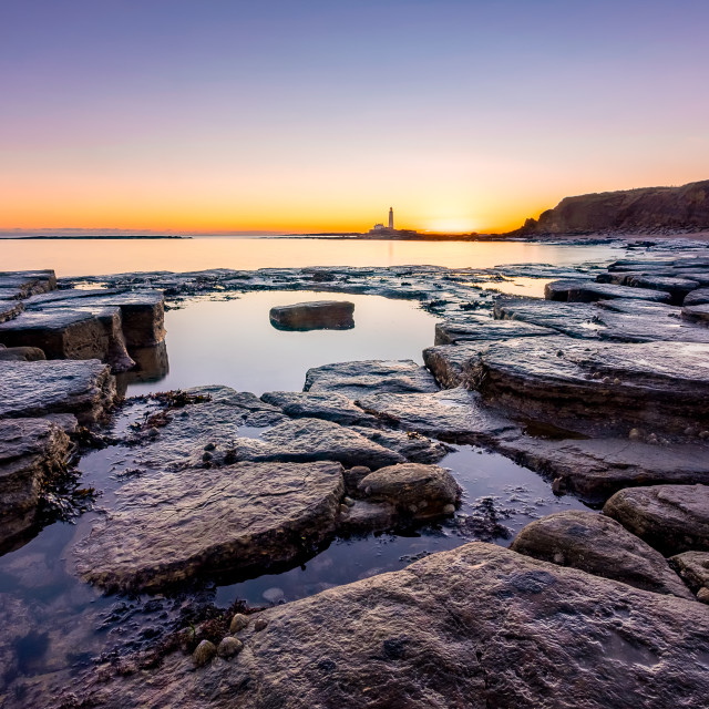 """""""View of St Mary's Lighthouse from Old Hartley"""" stock image"""