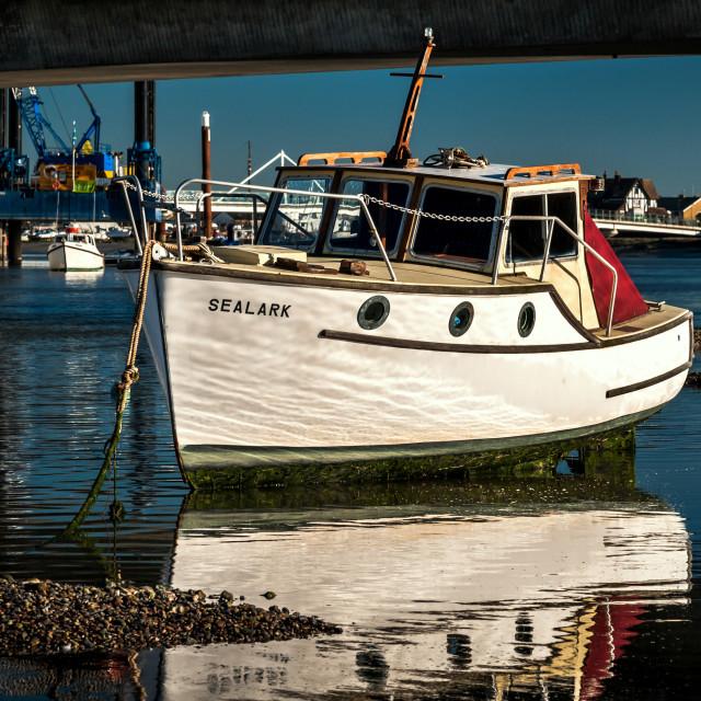 """Sealark"" stock image"