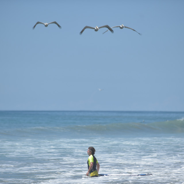 """Surf Birds"" stock image"