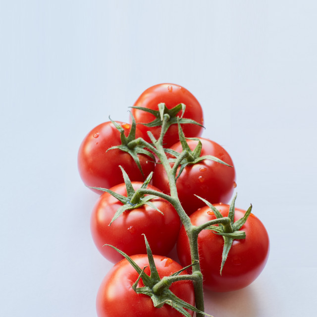 """Fresh cherry tomatoes on white background"" stock image"