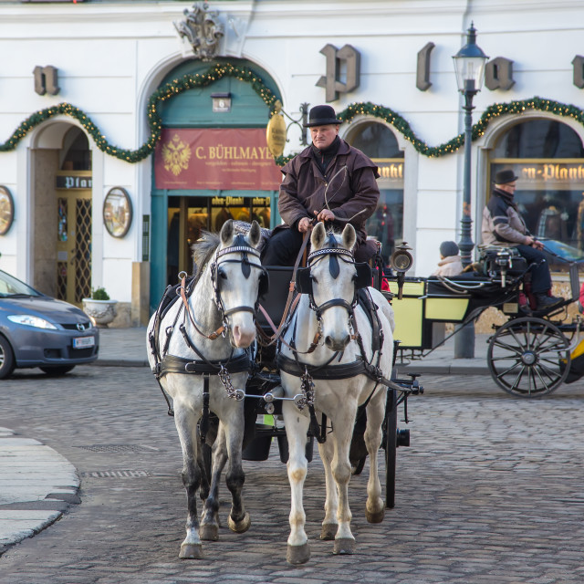 """""""Riding carriage horses in Vienna street"""" stock image"""