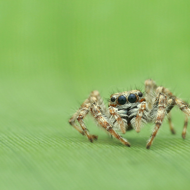 """Cute Spider"" stock image"