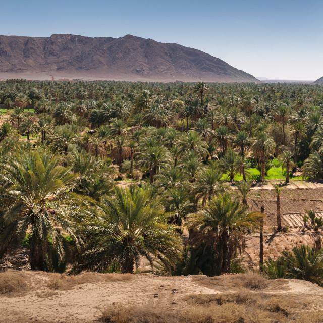 """""""Panoramic view over oasis of date palms, Figuig, Morocco"""" stock image"""