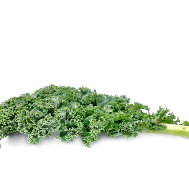 """leaf of kale cabbage"" stock image"