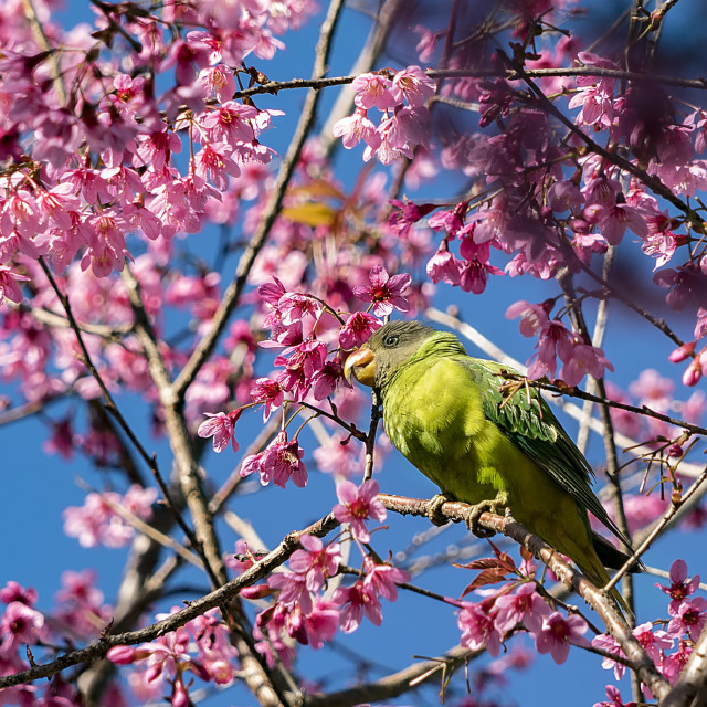 """""""Spring song"""" stock image"""