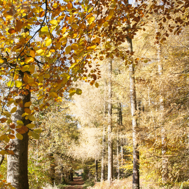 """Autumn colours, riverside walk, November 2103"" stock image"