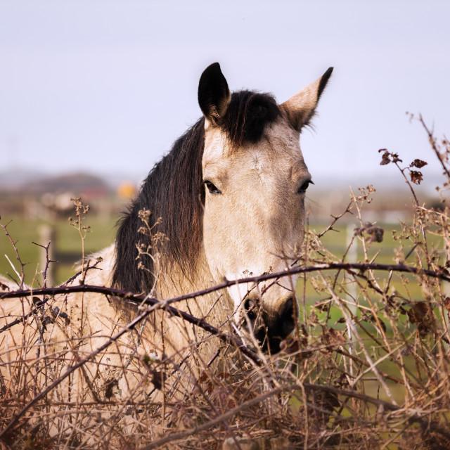 """""""Friendly Horse at His Barn"""" stock image"""