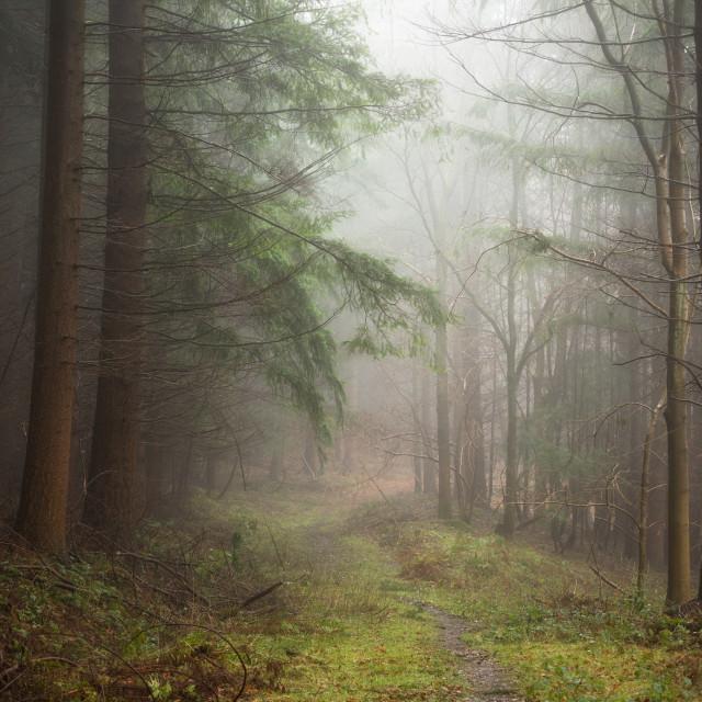 """""""Misty Light"""" stock image"""
