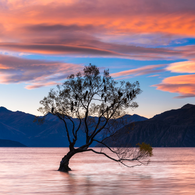 """""""Lone Tree Silhouette at Sunset"""" stock image"""