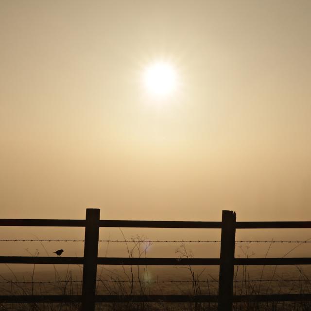 """""""Sun through mist 1."""" stock image"""