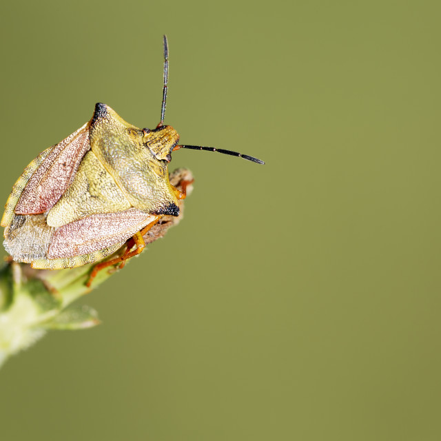 """""""Insect macro photography"""" stock image"""