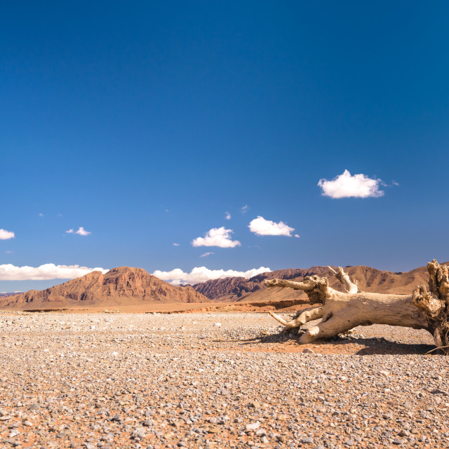 """Dead tree in the stone desert, Morocco"" stock image"