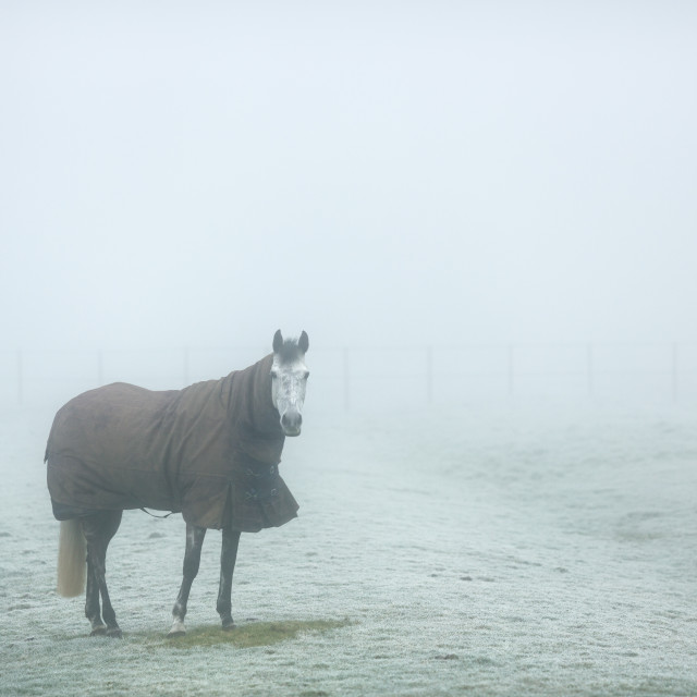 """Cold Horse"" stock image"