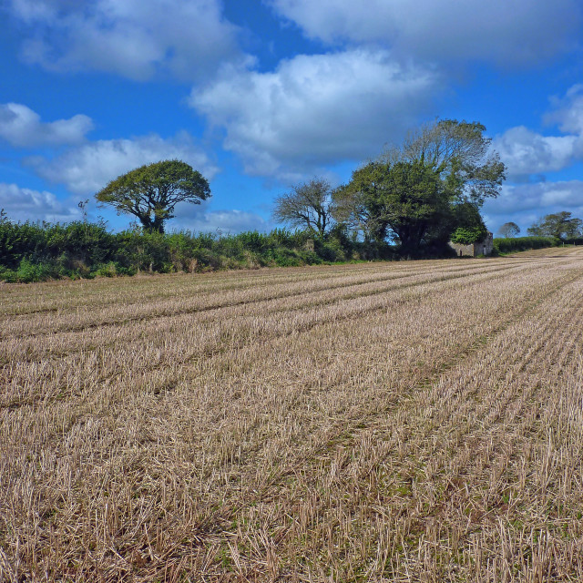 """Callington area field"" stock image"