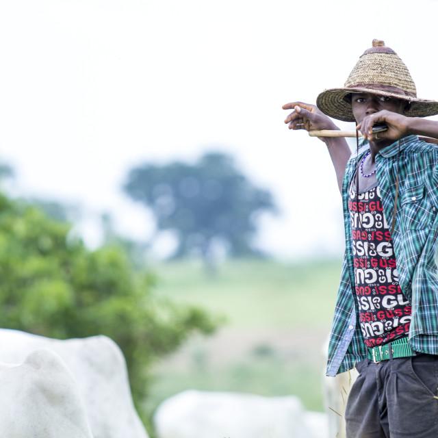 """Portrait of a Fulani Boy #cows"" stock image"