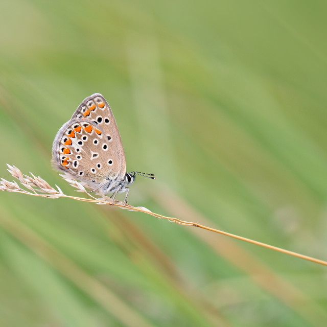 """Butterfly resting before departure"" stock image"