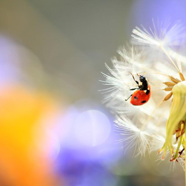 """""""Ladybug looking parachute"""" stock image"""