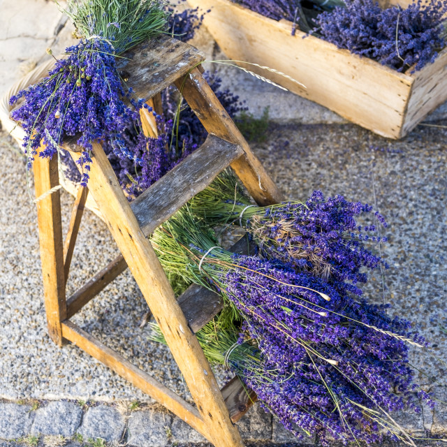 """""""Production of lavender in Sault France"""" stock image"""