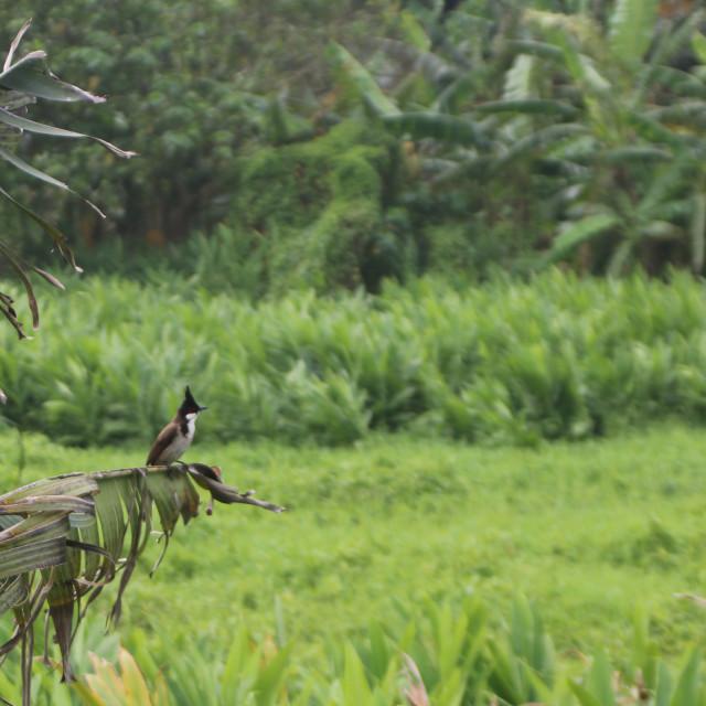 """""""Lamma Island Birdlife"""" stock image"""