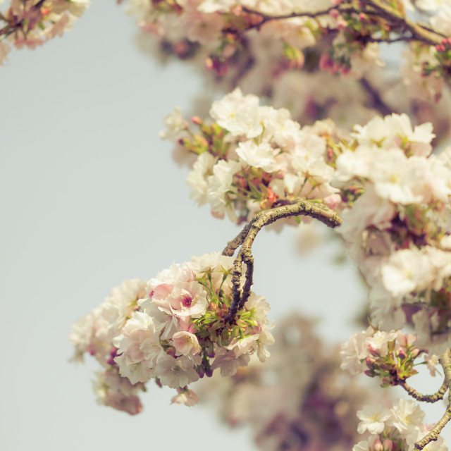 """""""Blossoming new leaves and flowers in faded saturated pastel tone"""" stock image"""