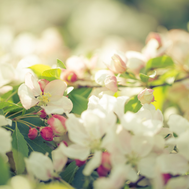 """Blossoming new leaves and flowers in faded saturated pastel tone"" stock image"