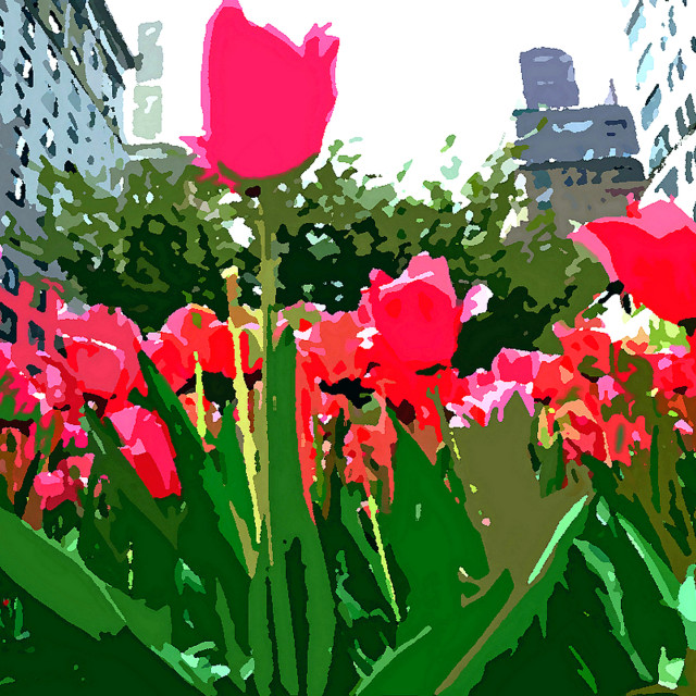 """""""Red Flowers on Park Avenue"""" stock image"""
