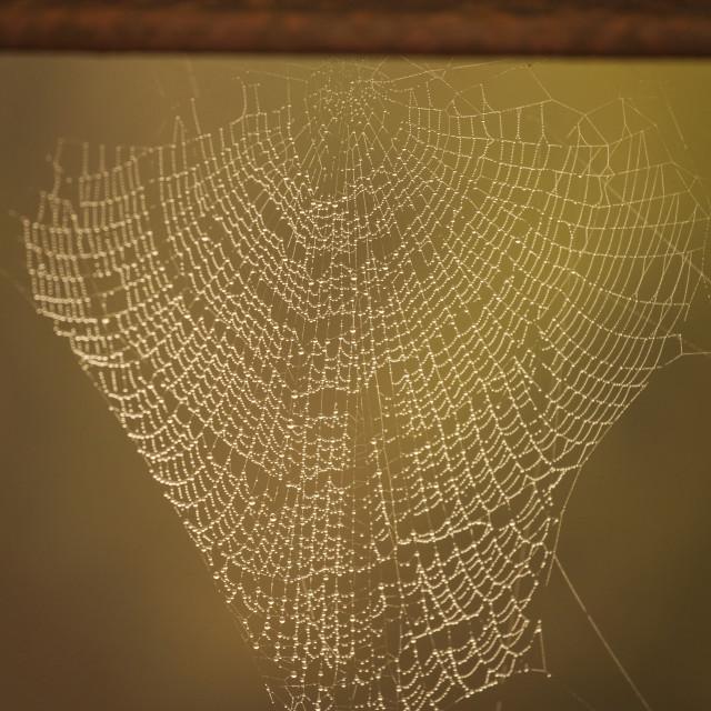 """Spyder web in the sunlight"" stock image"