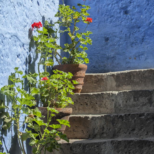 """""""Plants on stairs"""" stock image"""