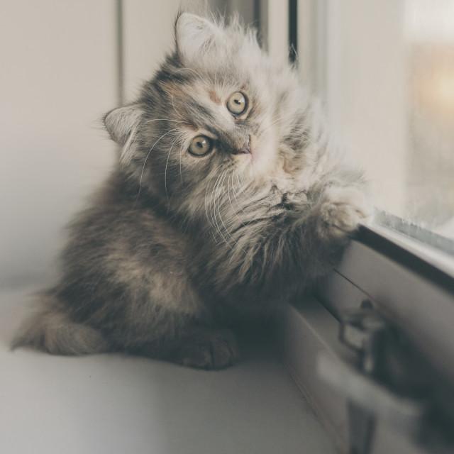 """""""Kitten on a windowsill"""" stock image"""