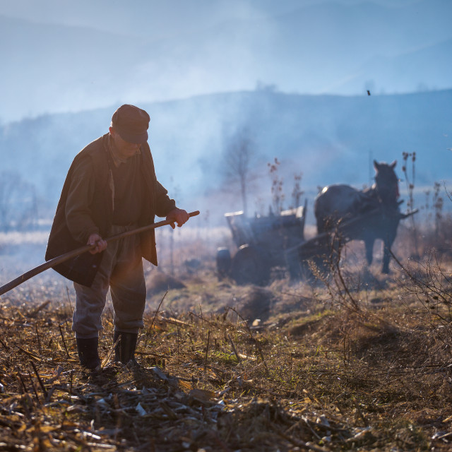 """TRANSYLVANIA,ROMANIA, NOVEMBER 21: Uknown man preparing the land for plowing..."" stock image"
