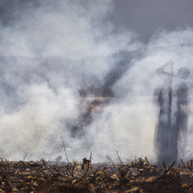 """Man working the land in smoke, agriculture"" stock image"