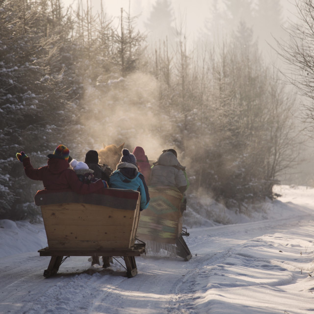 """""""beautyful sleigh in the winter trough the forest"""" stock image"""