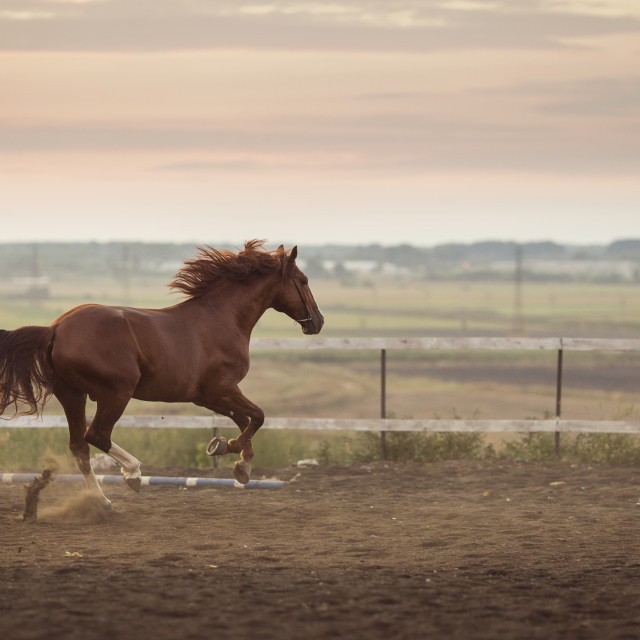 """beautyful horse running in the stable"" stock image"