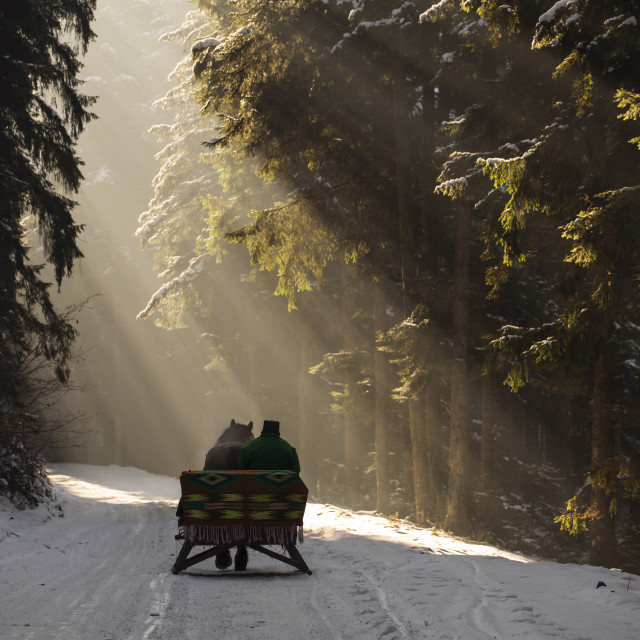 """beautyful sleigh in the winter trough the forest with beautiful background..."" stock image"