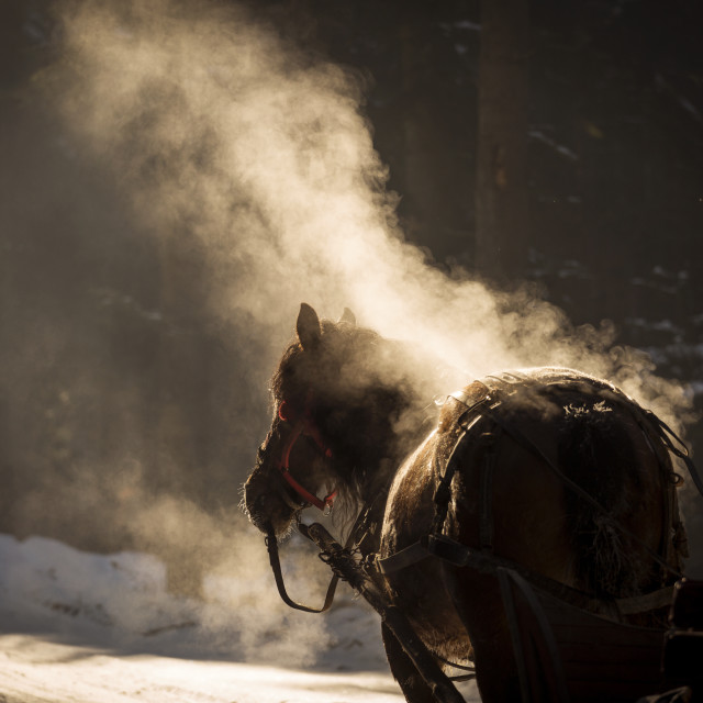 """""""steam horse beauty and nice black horse"""" stock image"""