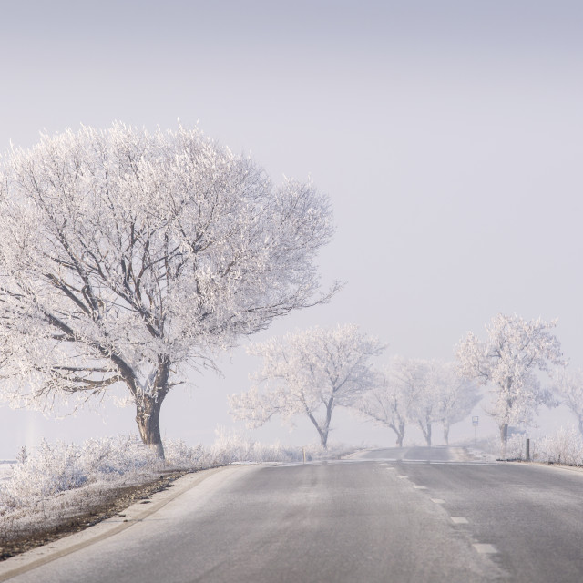 """winter trees with snow near the road"" stock image"