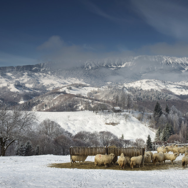 """Rural landscape from Romania in Carpathian Mountains.."" stock image"