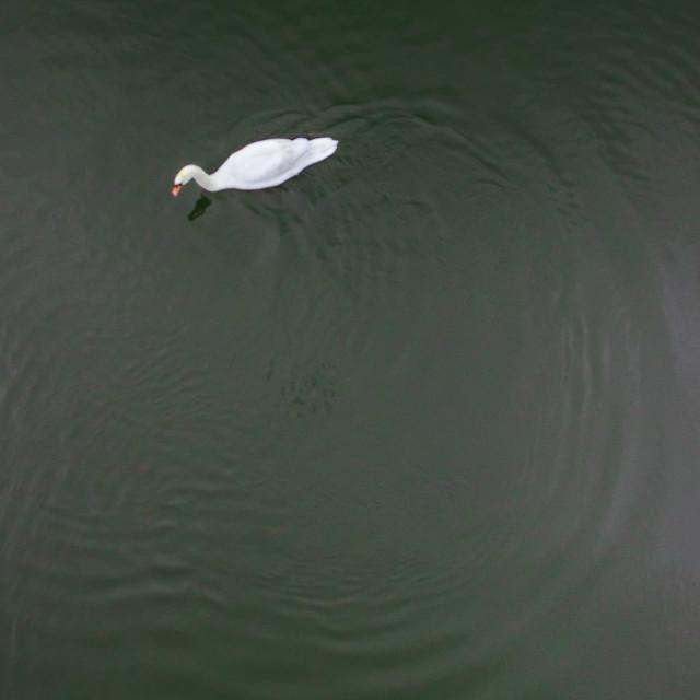 """""""Swan Circle"""" stock image"""