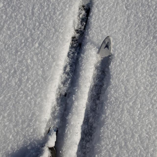 """""""Ski in snow"""" stock image"""