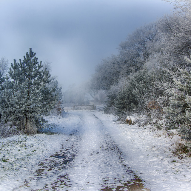 """""""A Snowy Country Lane"""" stock image"""