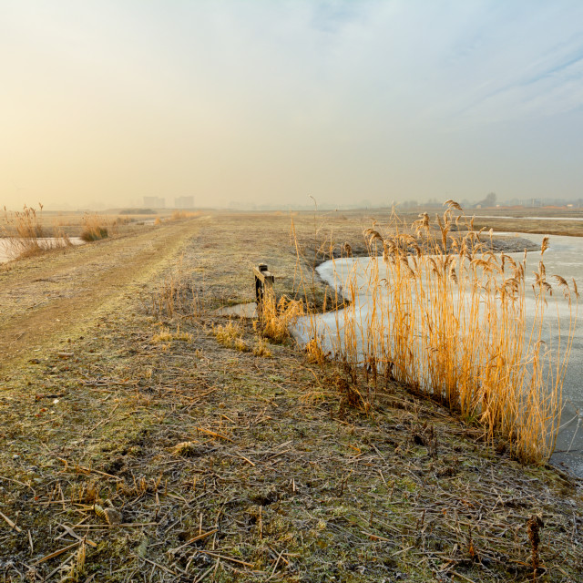 """Munnikenpolder in Winter"" stock image"