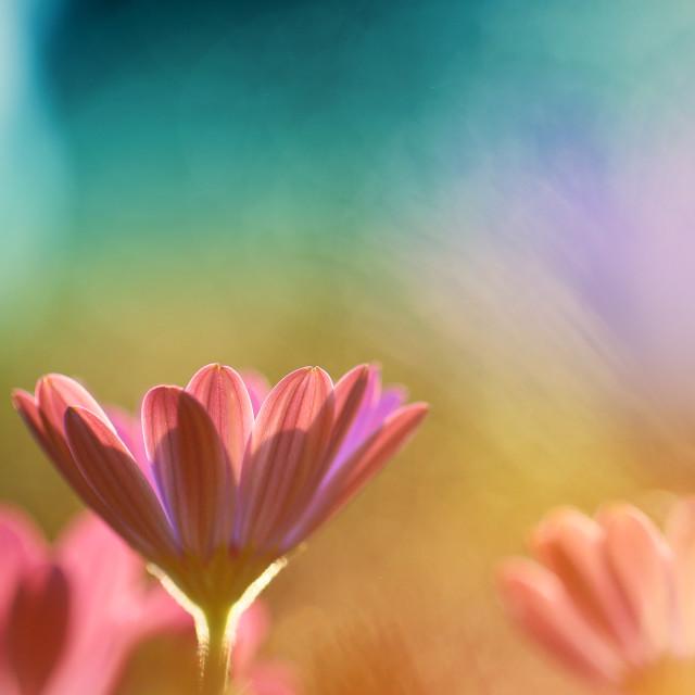 """In my garden grow beautiful flowers"" stock image"