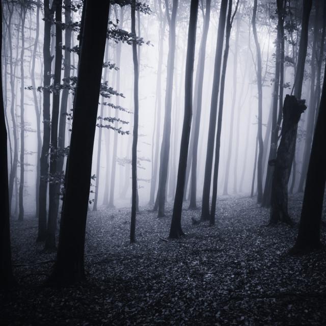 """dark forest in fog"" stock image"