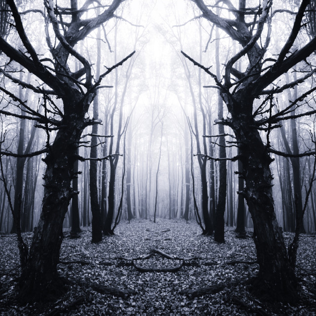 """scary old trees in dark forest"" stock image"