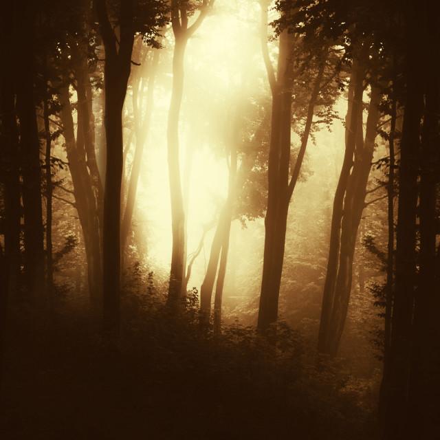 """dark forest background"" stock image"