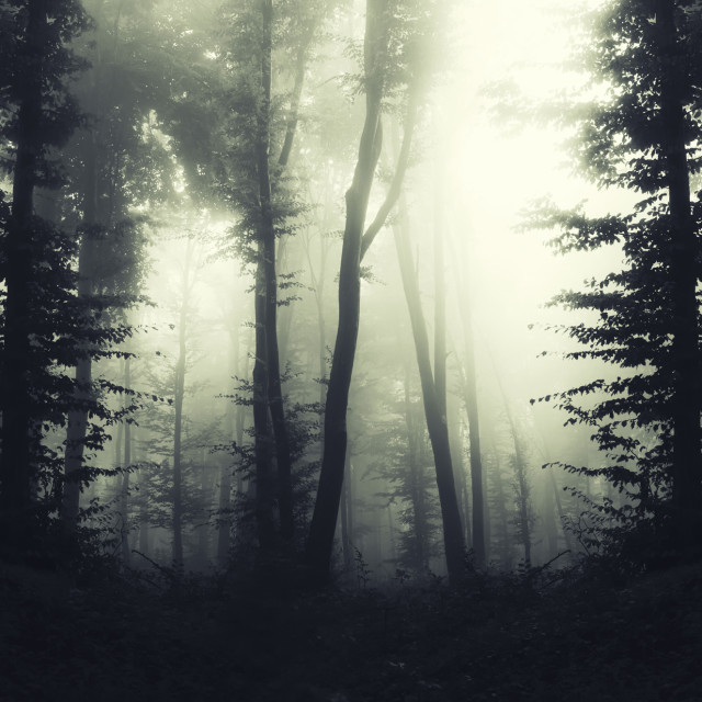 """fantasy forest background, atmospheric landscape"" stock image"